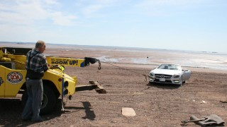 Best of 2012: A $125,000 beached Germanic whale