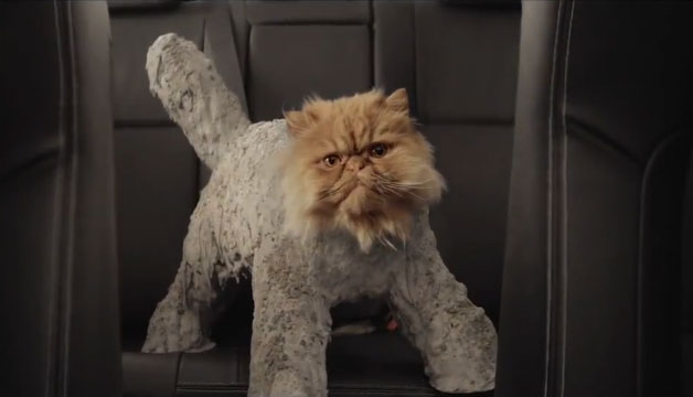 Cat loves Corolla in funny Toyota commercial