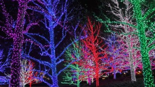 christmas tree light show f8nbxr9z