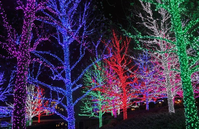lyn news winner mackaypride up christmas mercury competition contributed was lighting of daily overall lights mackay birch map the