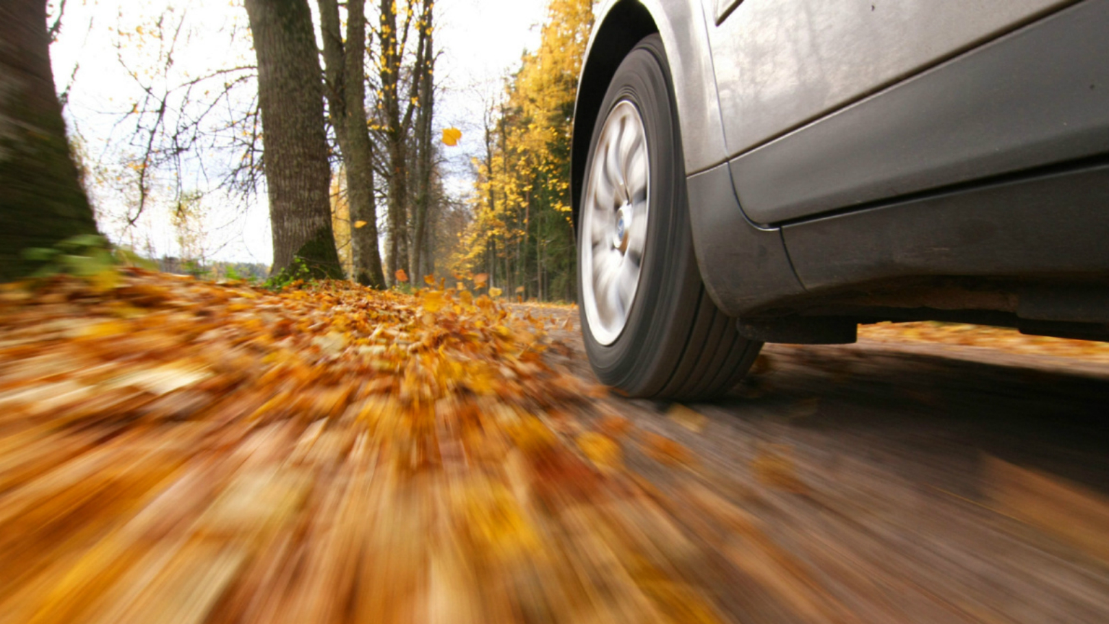 fall-drive