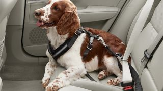 Pet Car Safety