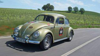 Pretzel Beetle