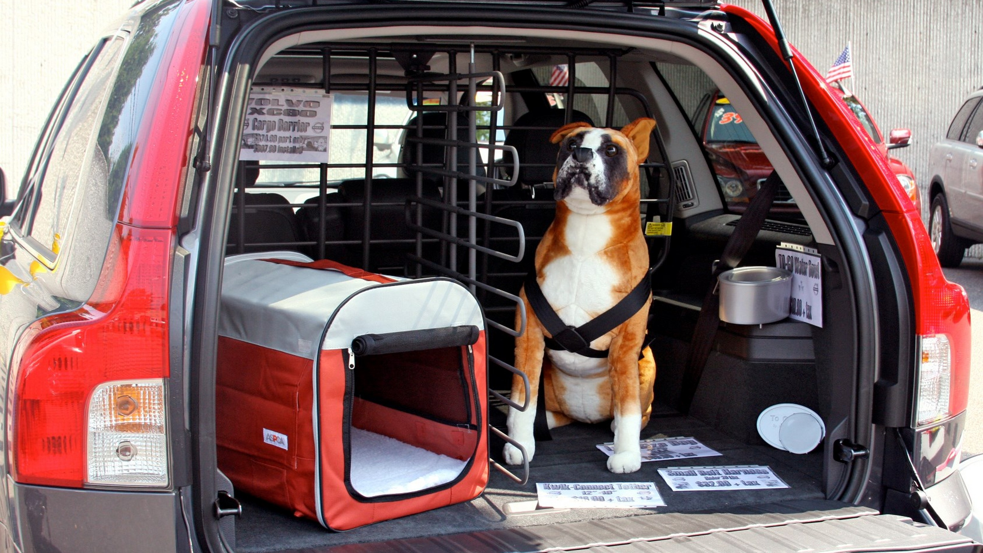 Affordable Cars for Dog Owners